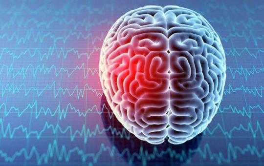 Brain Function Supplements